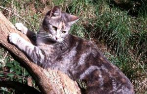 Tosca the cat enjoying a moment of sunshine.
